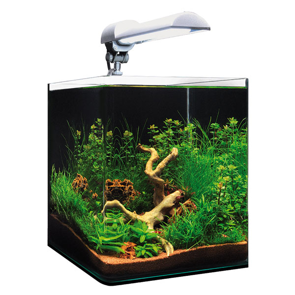 Ecumeur aquarium eau douce 28 images juwel seaskim 233 for Eau douce aquarium