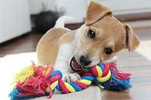 Hundespielzeug für kleine Hunde