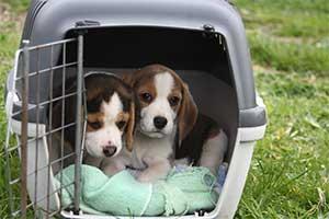 Transport für kleine Hunde