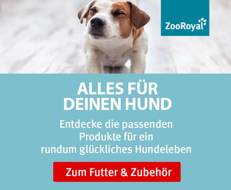 ZooRoyal Original für Hunde entdecken