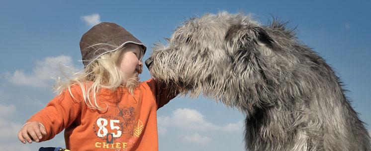 buffalo-line-hundesnack-image01