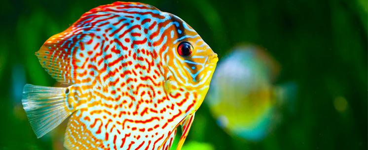 ferülast-aquaristik-teaser-image01