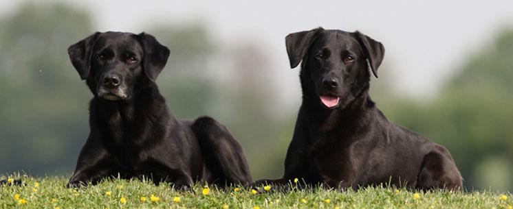 grau-hundefutter-image01