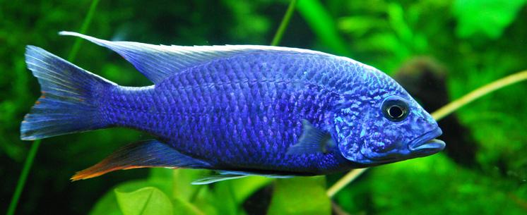 hydor aquaristik-image01