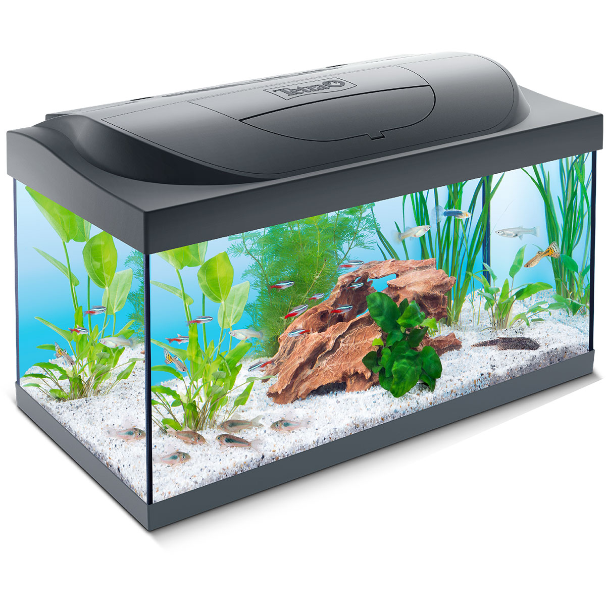 tetra capt n sharky led aquarium 54l themenaquarium aquarien f r kinder ebay. Black Bedroom Furniture Sets. Home Design Ideas