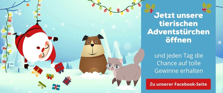 Katze Adventskalender Gewinnspiel