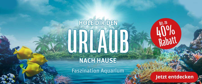 Traumhafte Aquarienwelten - Hole den Urlaub nach Hause