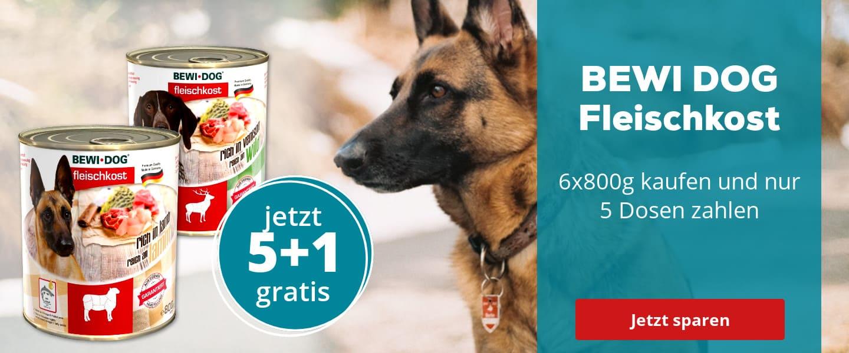 BEWI DOG zum Sparpreis