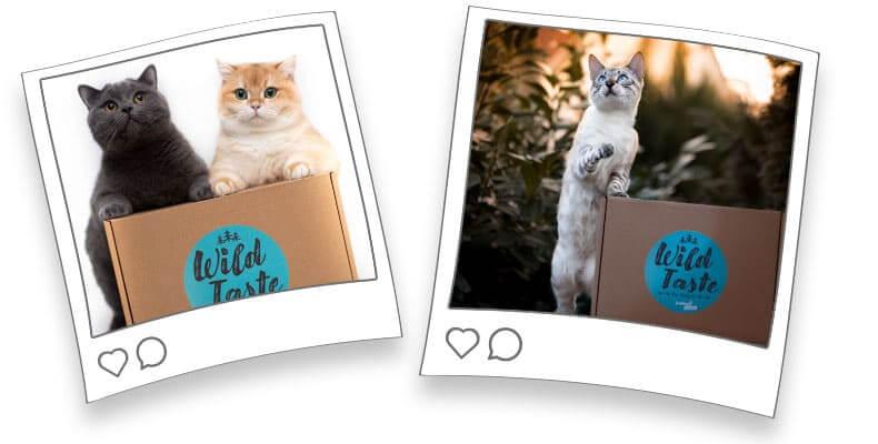 Wild Taste Box für Katzen