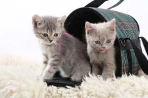 Katzentransport