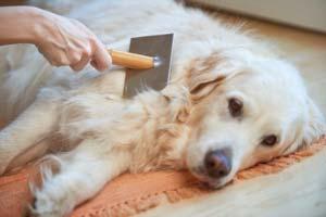 Fellpflege & Hygiene
