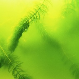JBL Algenvernichter AlgoPond Green