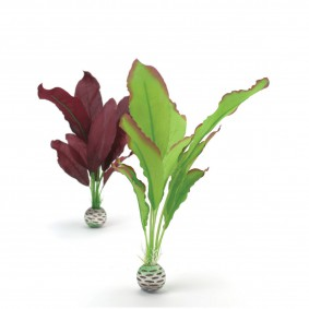 biOrb Aquariumpflanze violette Seidenpflanze M