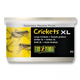 Exo Terra Reptilienfutter Grillen XL 34g