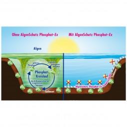 Dennerle Algenschutz Phosphat-Ex