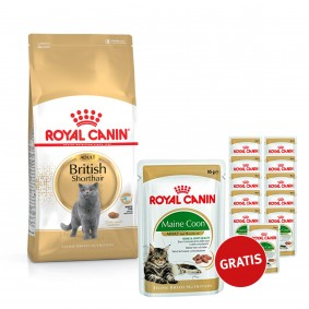 Royal Canin British Shorthair 10kg plus Feline Breed Nutrition Maine Coon 12x85g GRATIS