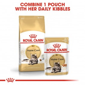 ROYAL CANIN ADULT Maine Coon 2kg + Nassfutter in Soße 12x85g