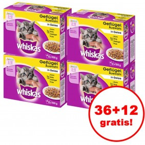 Whiskas Junior Geflügelauswahl in Gelee 12er Multipack 36 plus 12 gratis