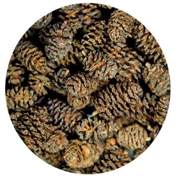 Hobby Erlenzäpfchen Alder Cones 50 Stk
