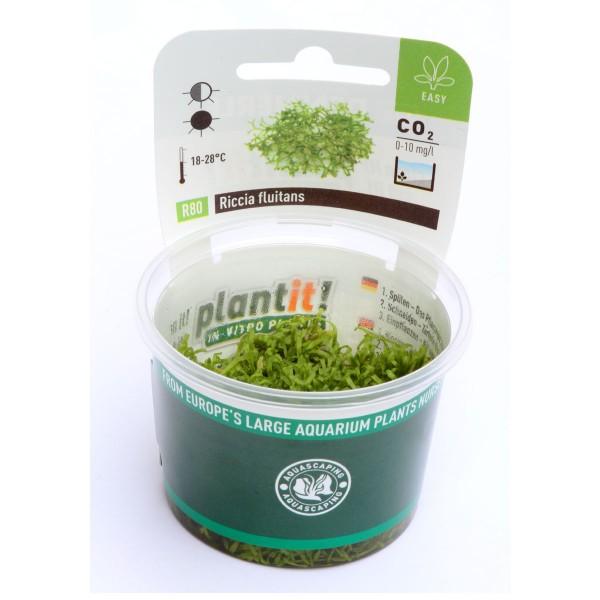 Dennerle Aquarienpflanze Riccia fluitans In-Vitro