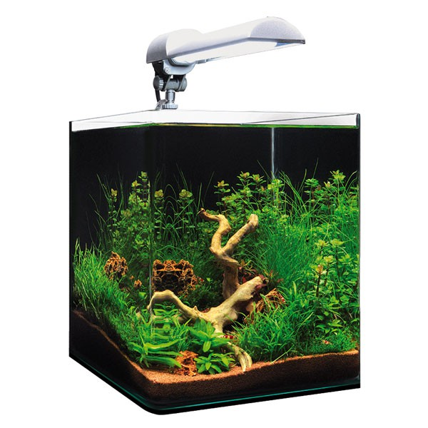 dennerle nanocube 20l aquarium g nstig kaufen bei zooroyal. Black Bedroom Furniture Sets. Home Design Ideas