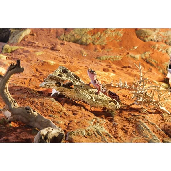 Exo Terra Crocodile Skull Terrariendekoration