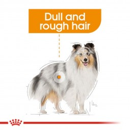 ROYAL CANIN COAT CARE Nassfutter für glänzendes Fell 12x85g
