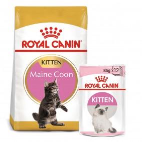ROYAL CANIN KITTEN Maine Coon 4kg + Kitten in Soße 12x85g