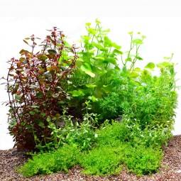Dennerle Plants Aquariumpflanzen Mix schnellwachsend