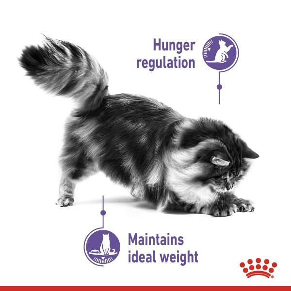 ROYAL CANIN APPETITE CONTROL CARE Trockenfutter für erwachsene Katzen