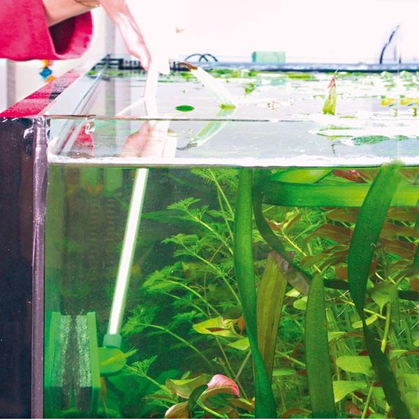 JBL Blanki Set Terrarien- und Aquarien-Scheibenreiniger mit Stiel