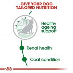 Royal Canin Hundefutter Mini Ageing +12 2x3,5kg für kleine, ältere Hunde