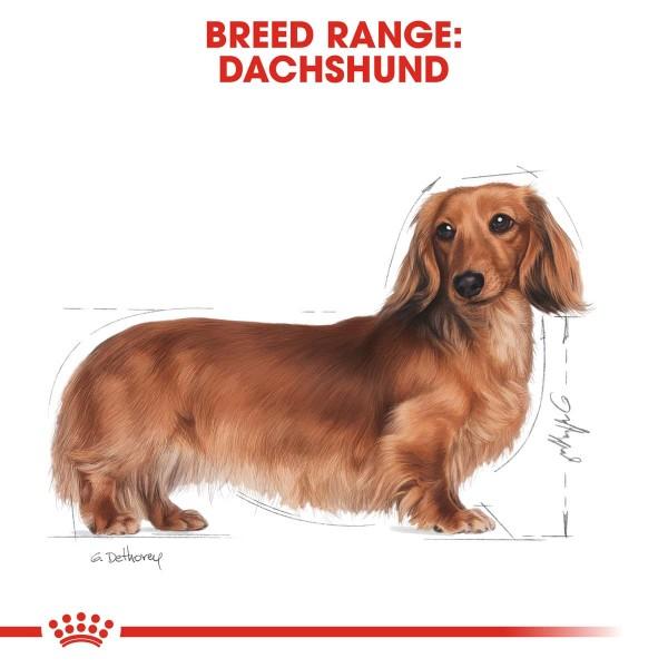 ROYAL CANIN Dachshund Adult Hundefutter nass für Dackel 12x85g