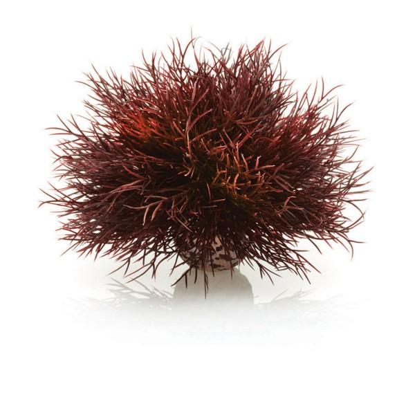 biOrb Aquariumpflanze Seelilie - Purpur