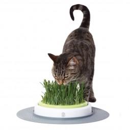 Catit Senses Gras Garten Set