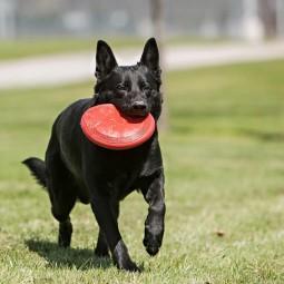 KONG Flyer Frisbee S