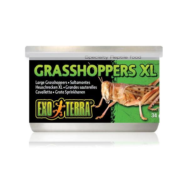 Exo Terra Reptilienfutter Heuschrecken XL 34g