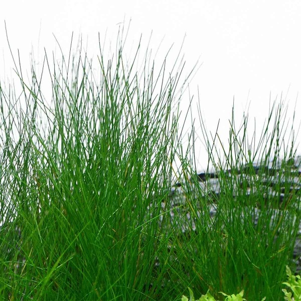 Planet Plants Vordergrundpflanzen Mix