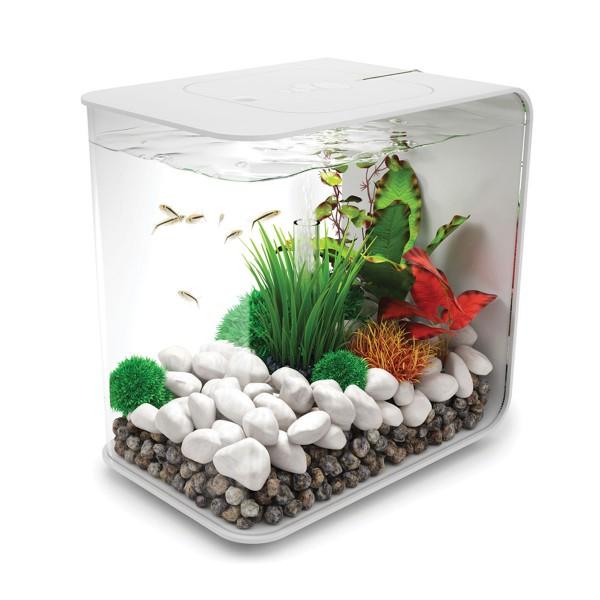 Aquarien online g nstig kaufen ber shop24 for Aquarium versand