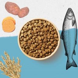 Purina BEYOND® reich an Lachs mit Vollkorngerste