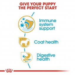 ROYAL CANIN Poodle Puppy Welpenfutter trocken für Pudel