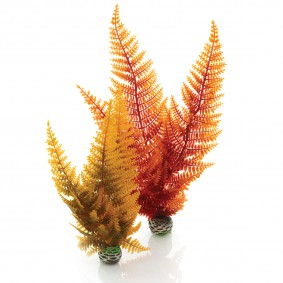 biOrb Aquariumpflanzen-Set Easy Plant Herbstfarn M