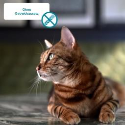 ZooRoyal Kitten Rind + Kalb & Huhn 400g