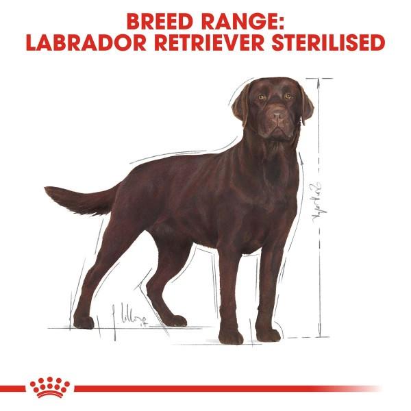 ROYAL CANIN Labrador Retriever Adult Sterilised Trockenfutter für kastrierte Hunde