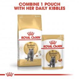 ROYAL CANIN British Shorthair Adult Katzenfutter nass für Britisch Kurzhaar 12x85g