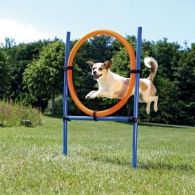 Trixie Dog Activity Agility kruh